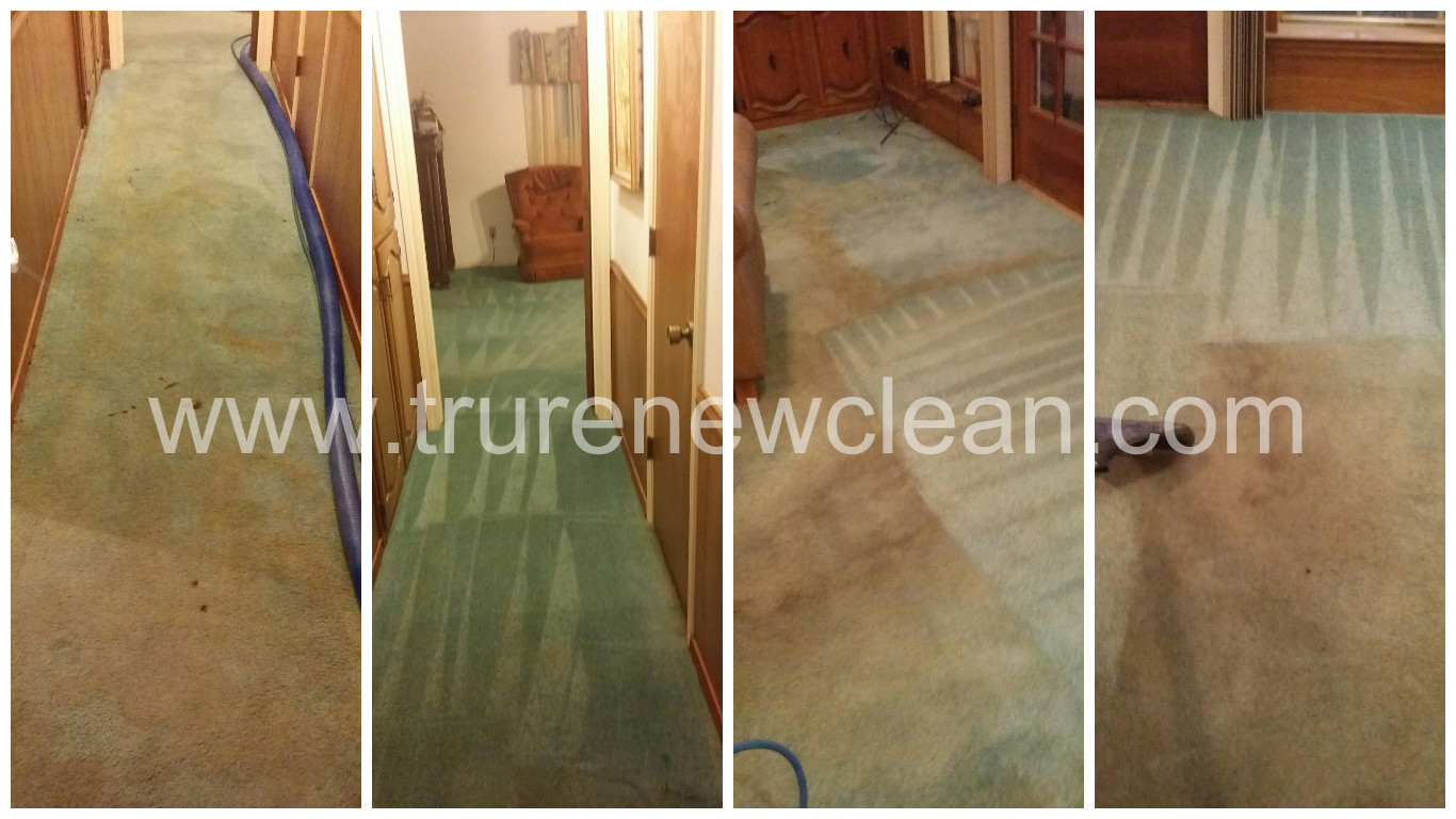 Carpet Cleaning w/ Pet Odor Treatment in Arlington,
