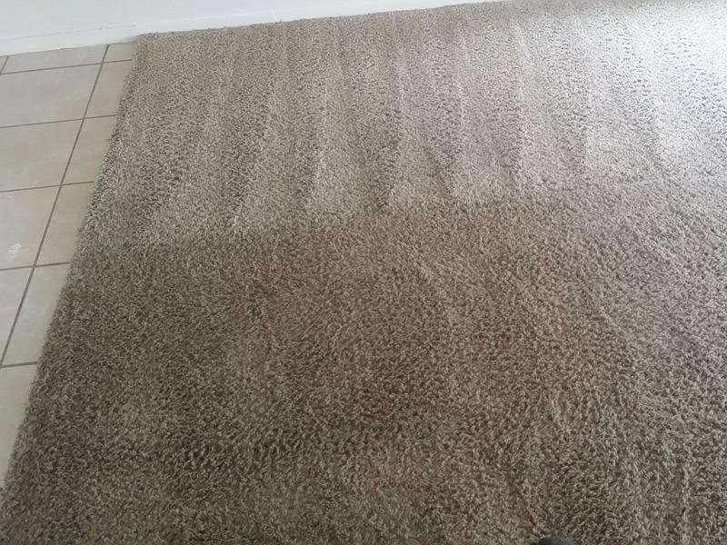 Carpet Cleaning In Allen Tx Trurenew Clean