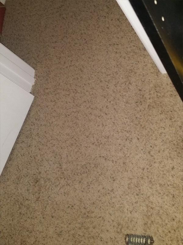 Carpet Pet Damage Repair In Frisco Tx Trurenew Clean